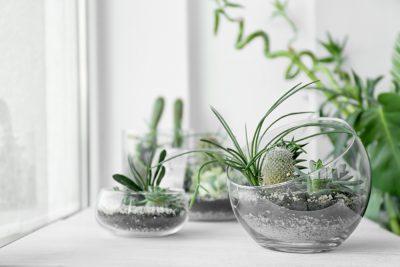 cute-indoor-plants