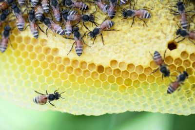 Bee and Wasp Removal Cost Guide