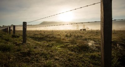 Rural Fencing Cost Guide